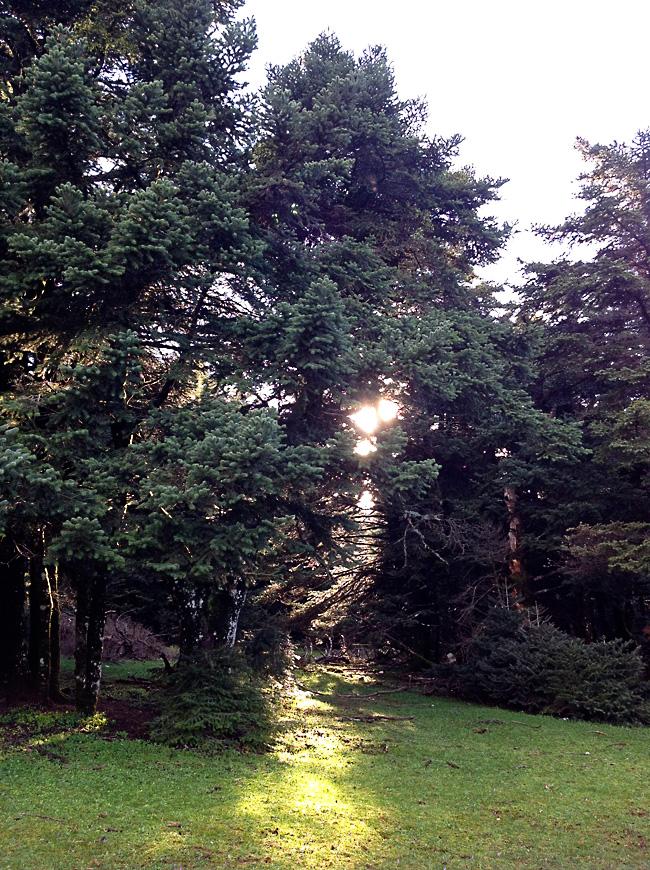 Δάσος Πάρνηθας