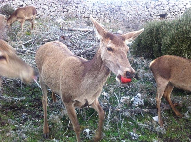 Ταΐζοντας ελάφια