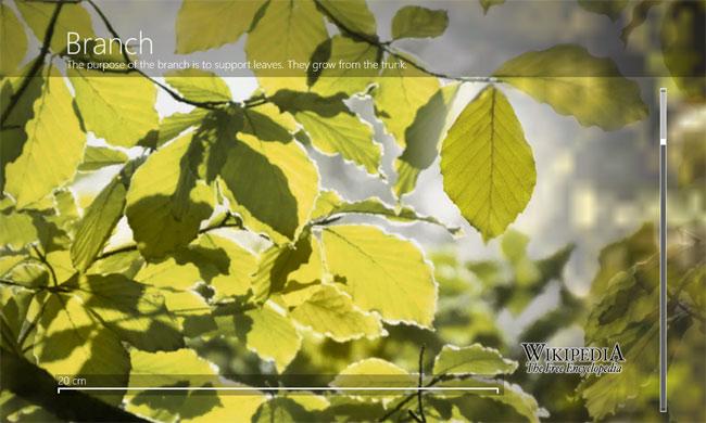 micro-plant2