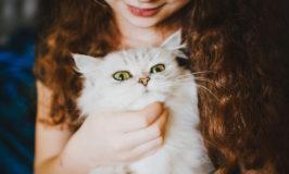 Ποιος κλώτσησε τη γάτα σου σήμερα;