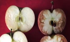 Ο πόνος που προκαλεί ο εκφοβισμός μέσα από το παράδειγμα με τα χτυπημένα μήλα